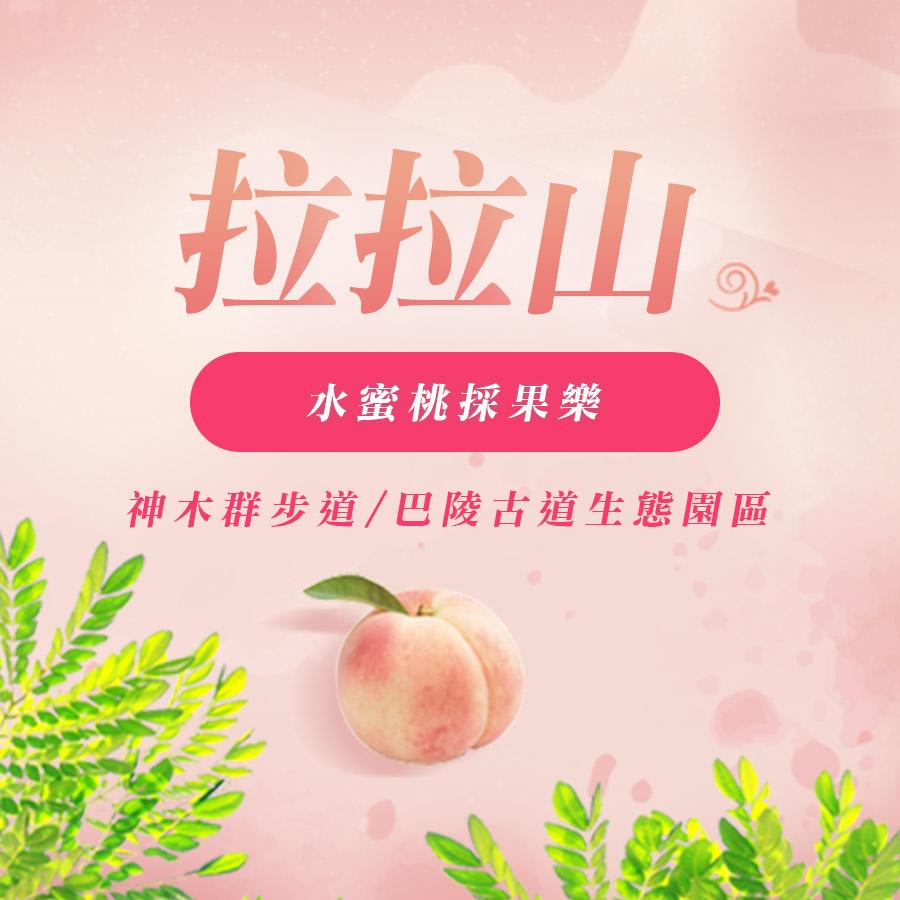 拉拉山 水蜜桃季節