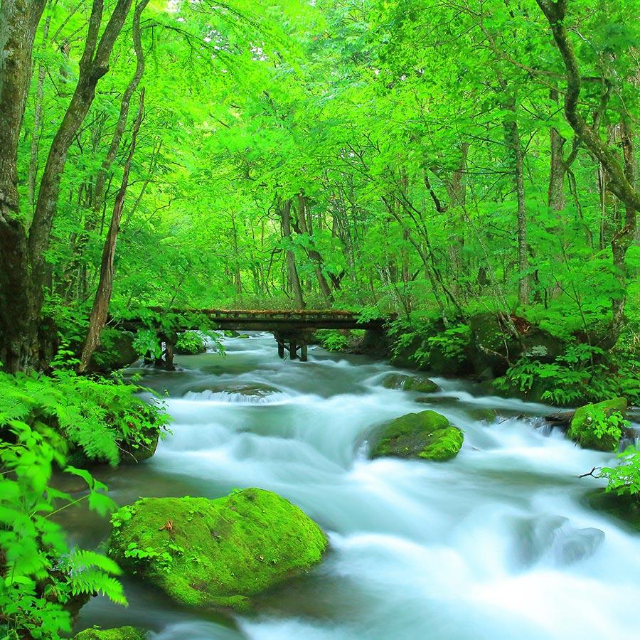 星野飯店|奧入瀨溪流|十和田湖