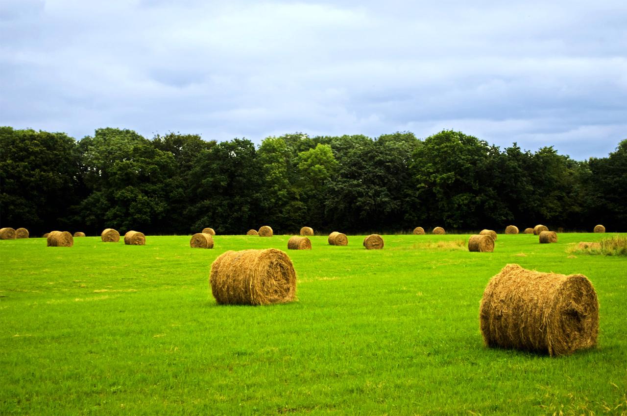 台中農村好好玩 - 農遊奇遇記