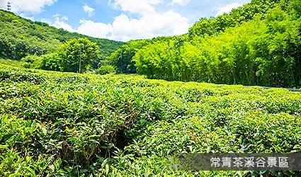常青茶溪谷景區