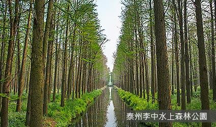 泰州李中水上森林公園含竹筏