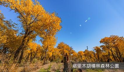 塔里木胡楊林森林公園