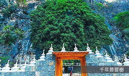 千年菩提樹