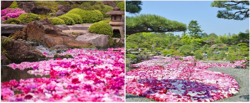 大根島牡丹人蔘園由志園