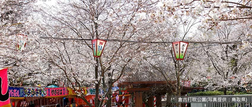 櫻百選:倉吉打吹公園