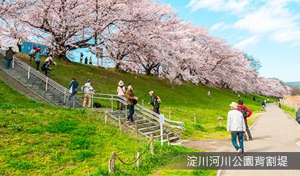 1.4公里櫻並木~淀川河川公園背割堤