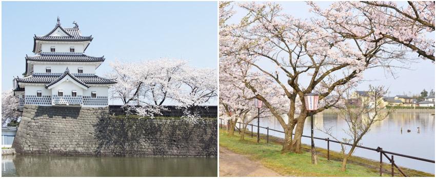 瓢湖.粉色櫻花隧道