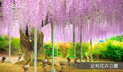 足利市花卉(藤花)公園