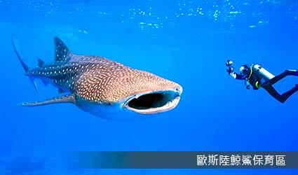歐斯陸鯨鯊保育區