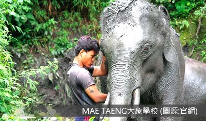 大象體驗營