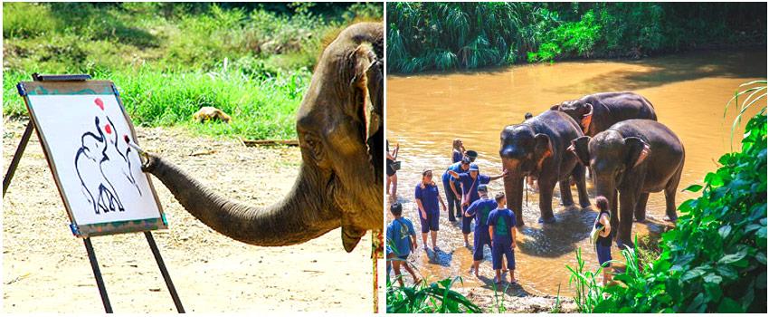 湄登大象學校