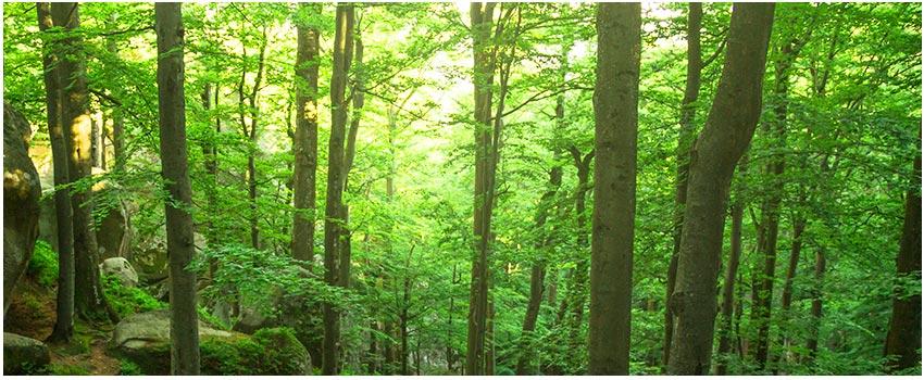 藤枝國家森林遊樂區