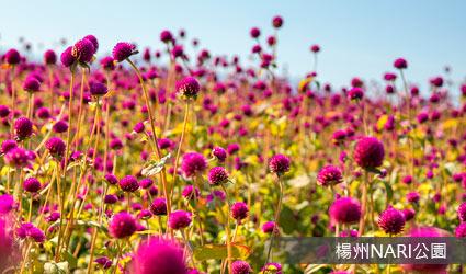 楊州NARI公園