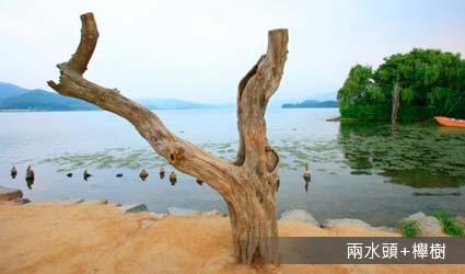 兩水頭+櫸樹