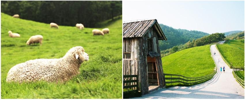 大關嶺天空牧場(餵羊+拖拉機車)