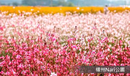 拉哩花海公園楊州Nari公園