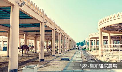 巴林_皇家駱駝農場