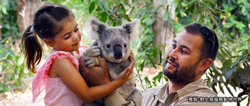 雪梨-野生無尾熊動物世界