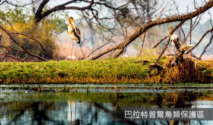 印度_巴拉特普爾鳥類保護區