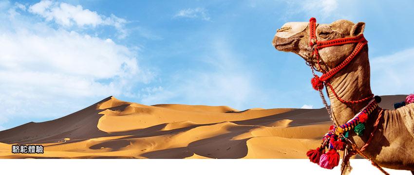 印度-駱駝體驗