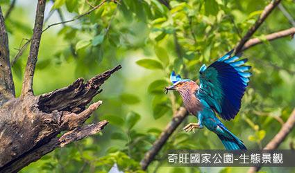 尼泊爾_奇旺國家公園