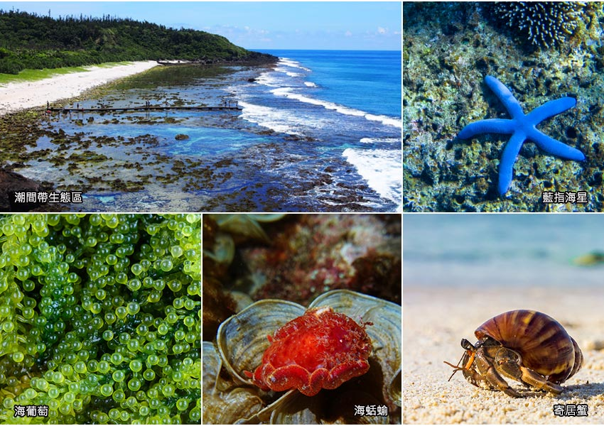 綠島潮間帶生態