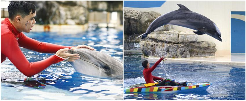 遠東海洋公園-海豚秀