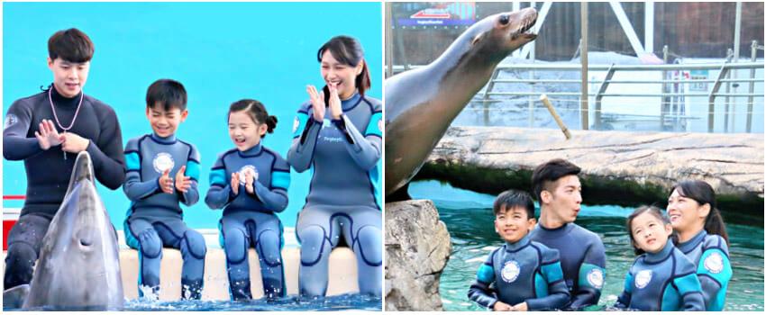 海豚餵食秀