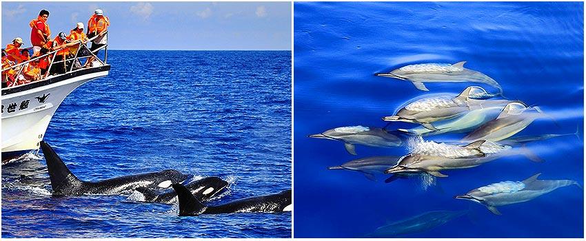 鯨世界 賞鯨豚生態之旅