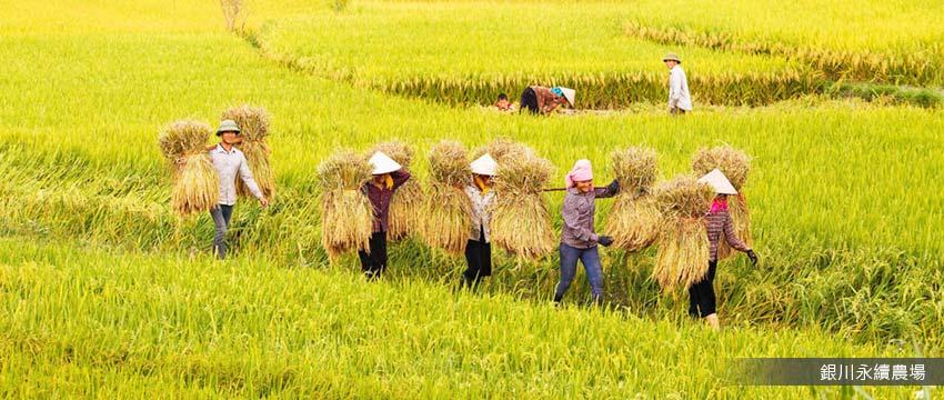 銀川永續農場