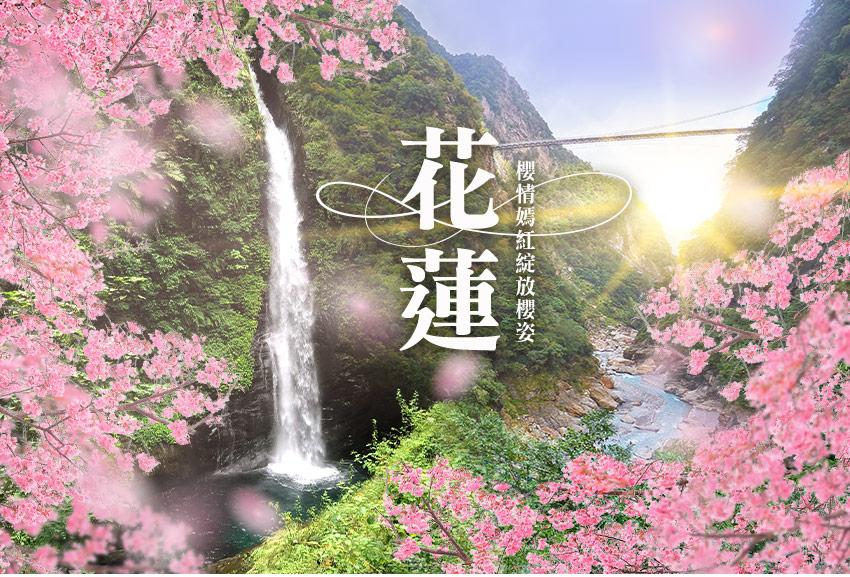 櫻情嫣紅綻放櫻姿花蓮2日