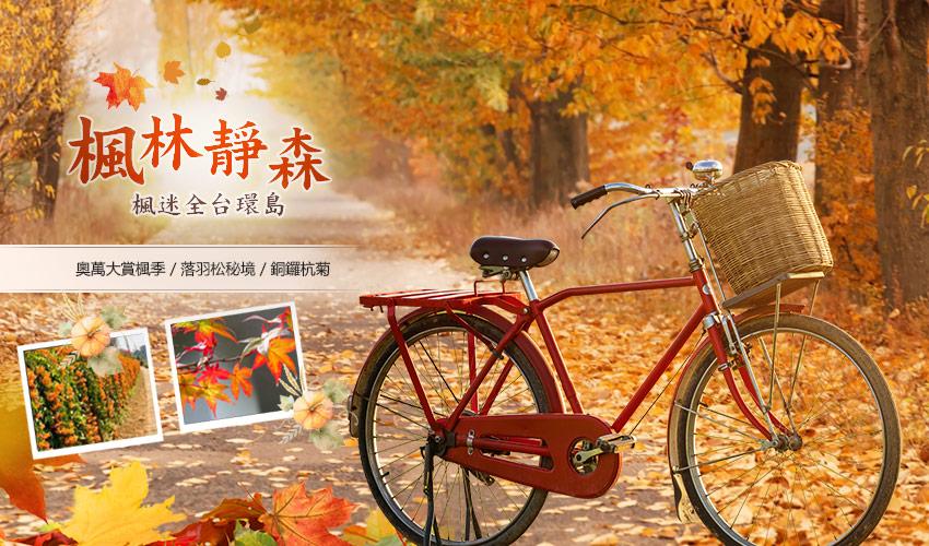 奧萬大賞楓季、落羽松秘境、銅鑼杭菊、池上伯朗大道田野騎行