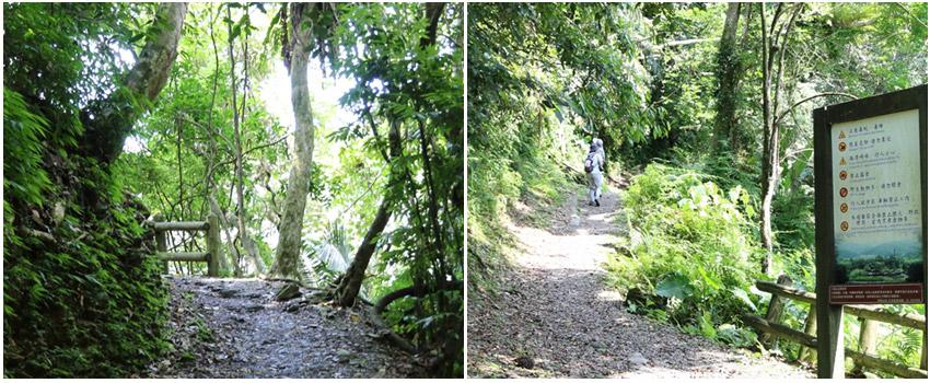 小泰山森林浴步道