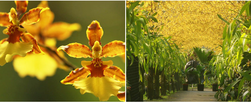 金雙甡花卉農場