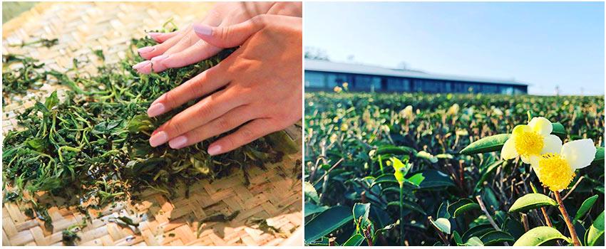 茶農手作生活體驗