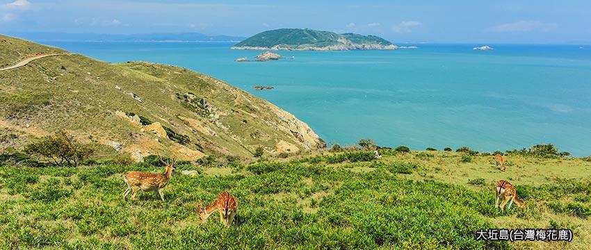 大坵島-台灣梅花鹿