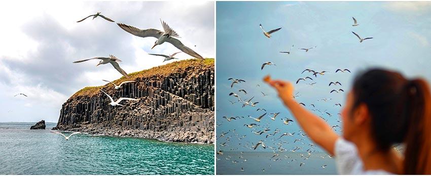 遊船澎湖北海+餵燕鷗