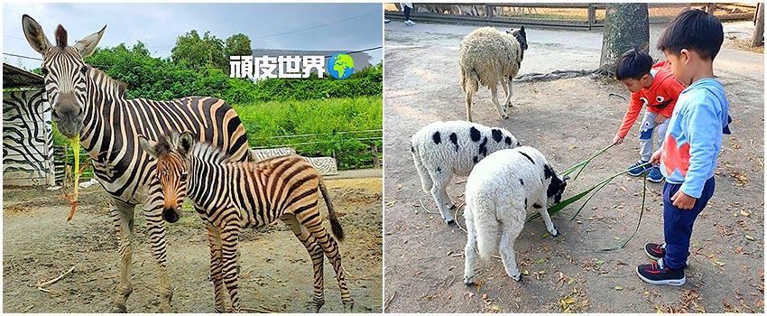 南臺灣最大野生動物園~頑皮世界