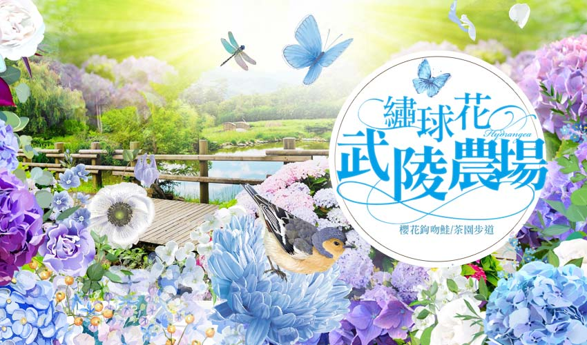 武陵農場1日~紫藤花聖地、櫻花鉤吻鮭、茶園步道秘境