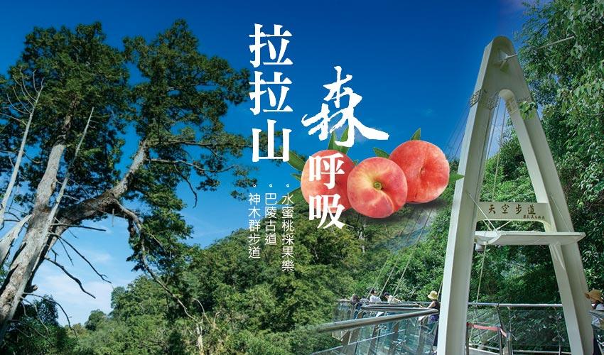拉拉山、神木群步道、水蜜桃採果樂